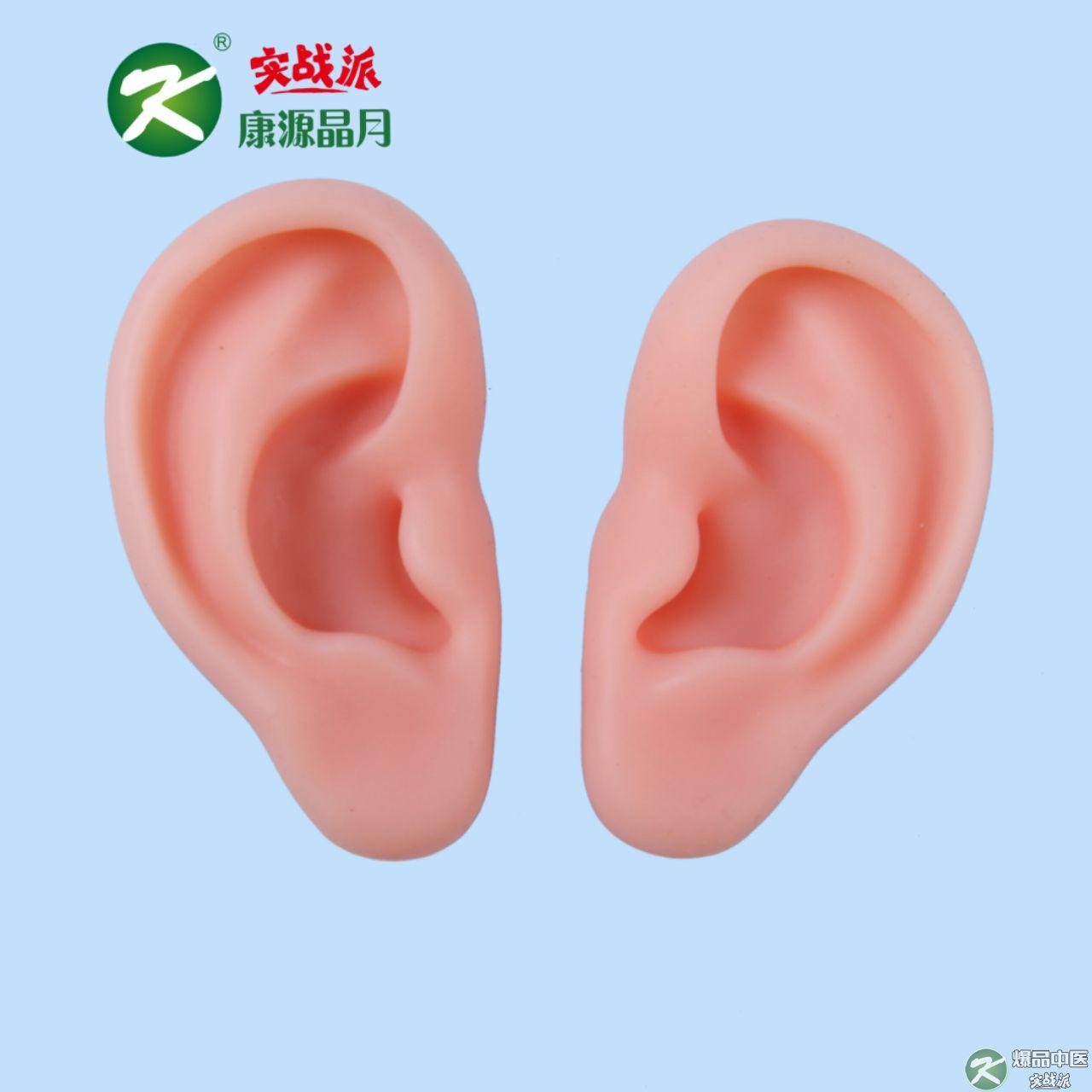 小耳朵模型